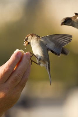 Oiseaux Tuileries